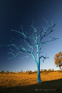 blue-tree-mount-annan