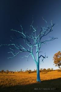 blue-tree-mount-annan